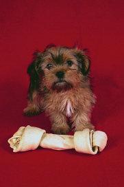 Cutesy Puppy National Pet Week